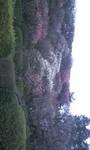 池上の梅園.jpg